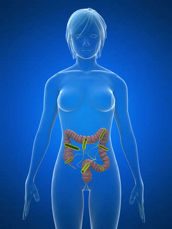 small intestine: transparent body with colon infection