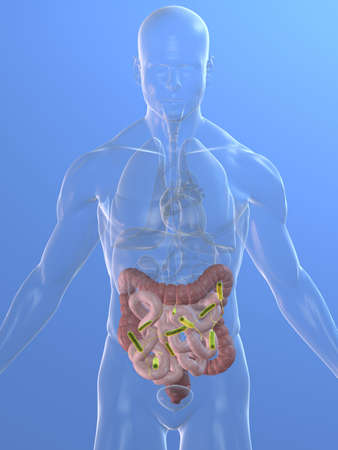 achy: transparent body with small intestines infection Stock Photo