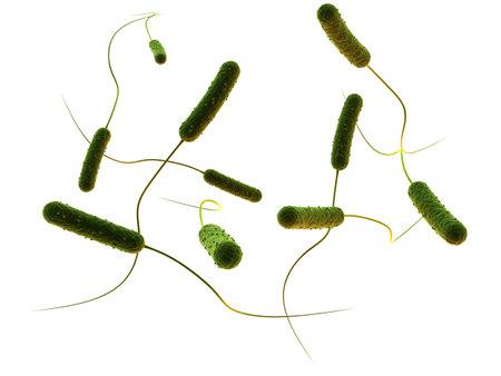 rod shaped bacteria Stock Photo - 5960261