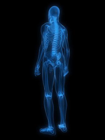 esqueleto humano: rayos x-esqueleto humano Foto de archivo