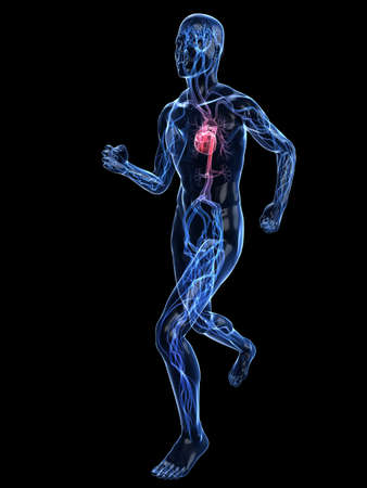 with stamina: jogger - vascular system