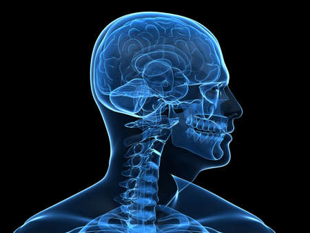 x-ray human head with brain parts photo