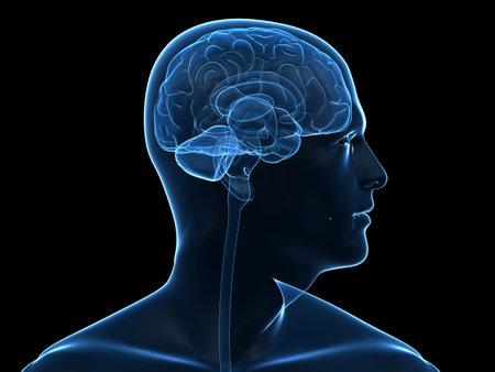 transparent human head shape with brain