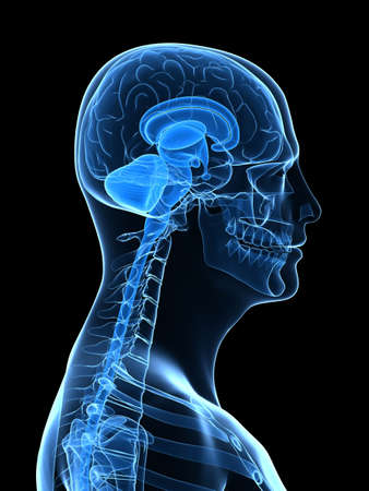 x-ray human head with brain parts Stock Photo - 5960274
