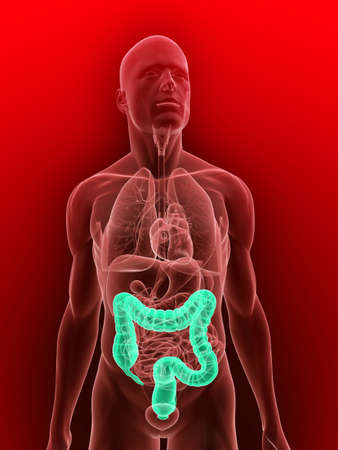 achy: transparent body with highlighted colon Stock Photo