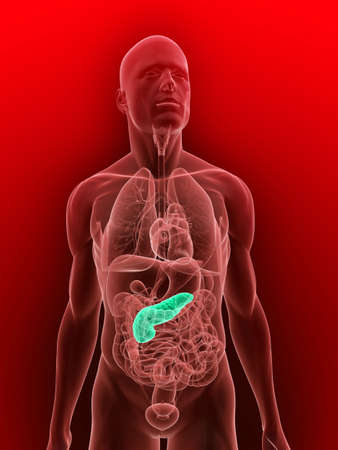 transparent body with highlighted pancreas Stock Photo - 5960354