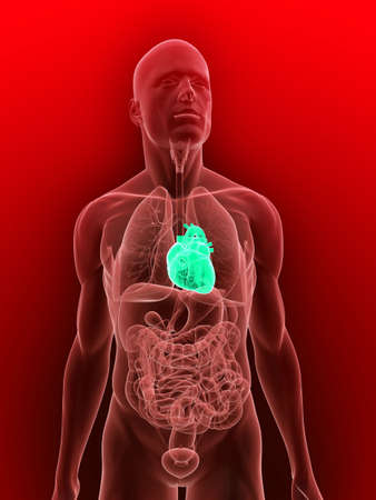 inflammated: transparent body with highlighted heart