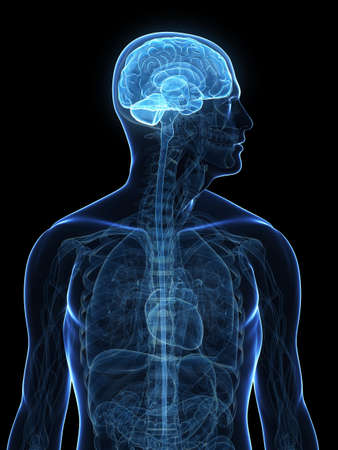 zenuwcel: transparante menselijk lichaam met gemarkeerde hersenen