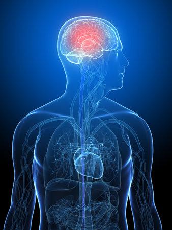 cerebro humano: cuerpo humano transparente con cerebro resaltado