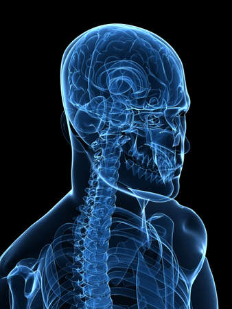 x-ray human head with brain Stock Photo - 5960457