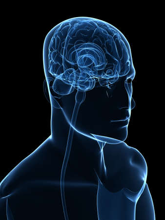 transparent human head shape with brain photo