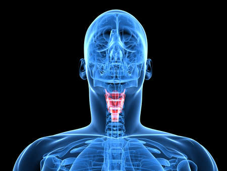 adam: x-ray human head with highlighted larynx Stock Photo