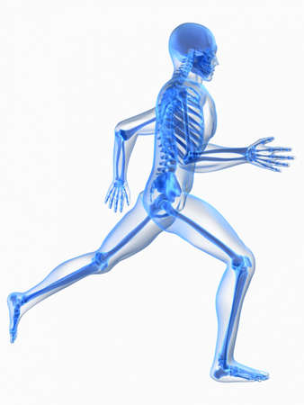 physical training: transparent running skeleton