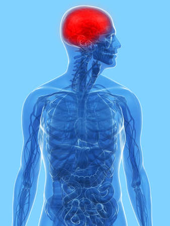 transparent anatomy with highlighted brain photo