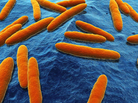 close up of some isolated acetobacter bacteria
