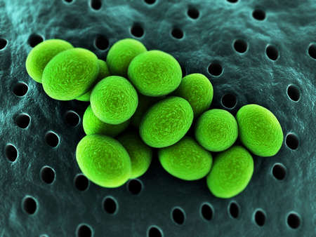 staphylococcus: close up of staphylococcus bacteria Stock Photo