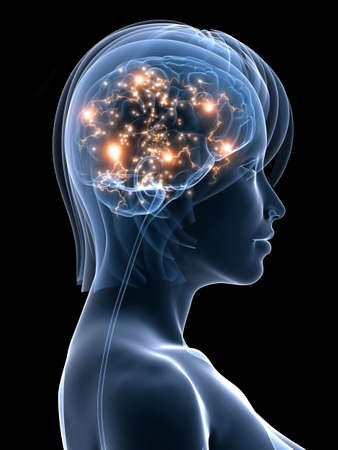 female head shape with active brain Stock Photo - 6003215