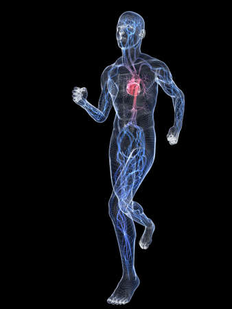 bloodstream: jogger - wire with vascular system