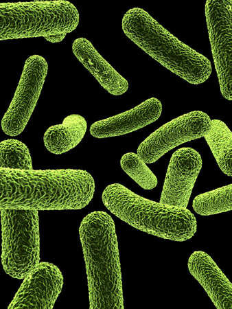close up of rod shaped bacteria
