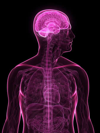 human x-ray head with brain parts Stock Photo - 6003199