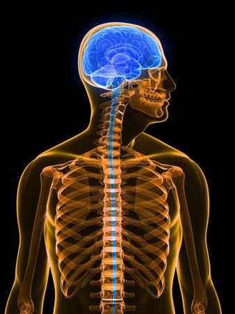 human brain parts Stock Photo - 6003183