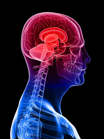 highlighted brain - headache/migraine Stock Photo - 6003188