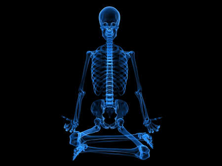 esqueleto humano: rayos x-esqueleto humano sentado