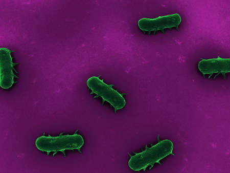 schyzomycete: close up - salmonella bacteria  Stock Photo