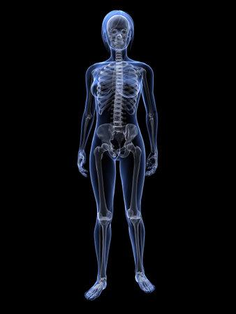 transparent female body with skeleton
