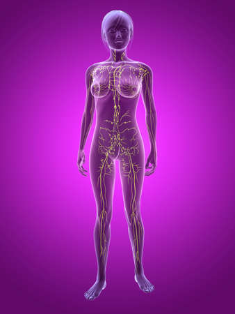 lymph: transparent female body with highlighted lymphatic system