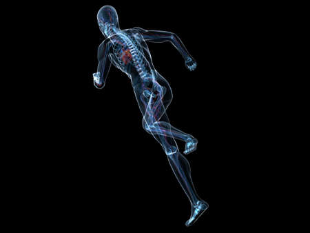 inflammated: running skeleton with highlighted heart