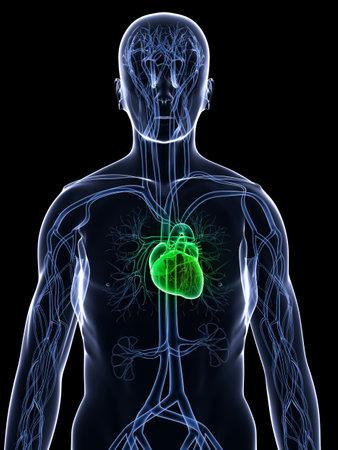 xray: x-ray body - healthy heart Stock Photo