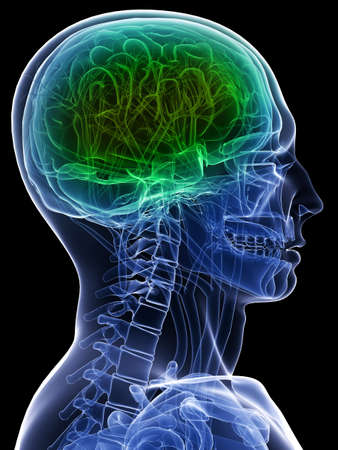 x-ray head - healthy brain photo