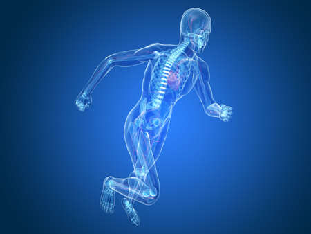 jogger: running skeleton with highlighted heart