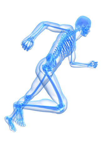 transparent male anatomy: running skeleton