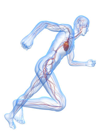 bloodstream: transparent running man with vascular system Stock Photo