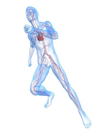 transparent running man with vascular system photo