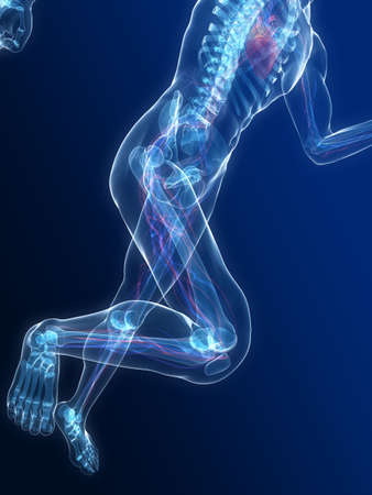 bloodstream: running skeleton with highlighted heart