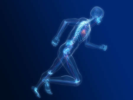 running skeleton with highlighted heart photo