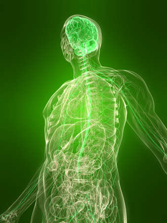 transparent body with healthy brain Stock Photo