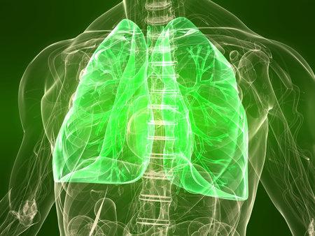 pulmon sano: cuerpo transparente con pulmones sanos