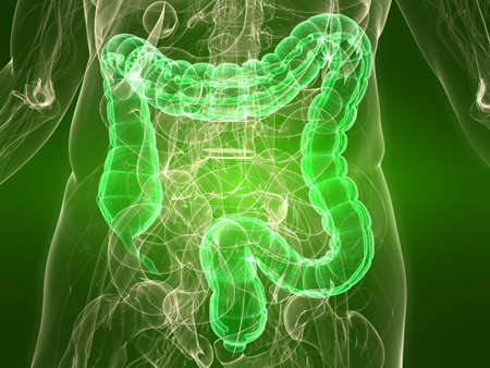 colon: transparent body with healthy colon