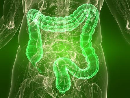 colon: transparent body with healthy colon