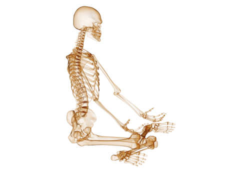 sitting human skeleton photo