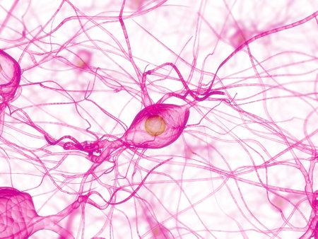 cellule nervose: cellula nervosa