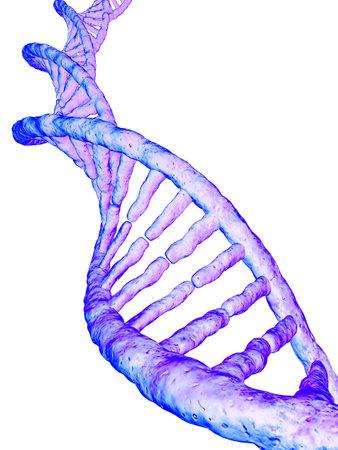 cromosoma: modelo de gen