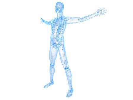 male skeleton photo