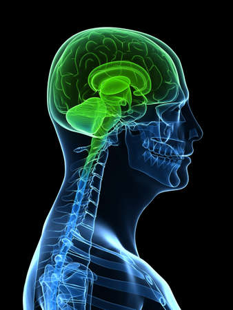 transparent head with highlighted brain photo