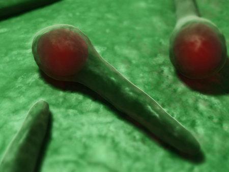 tetani bacteria - close up photo