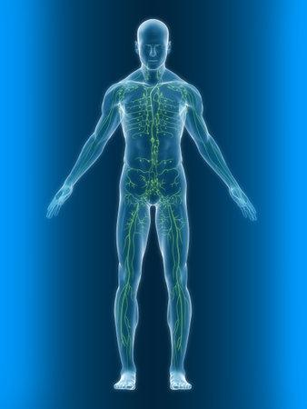 corpo trasparente con sano sistema linfatico